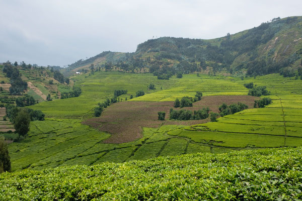Ein häufiges Bild in Ruanda