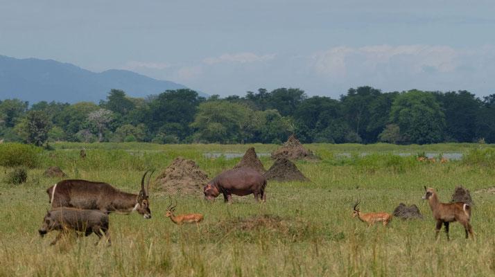 Liwonde Nationalpark - So viel Wildlife auf einem Fleck