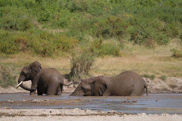 herrlich...Elefanten die ien Schlammbad nehemen