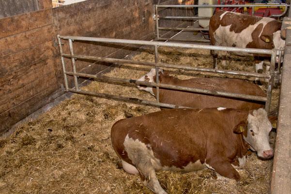 Vor dem Kalben kommen trächtige Kühe in eine großzügige Strohbox, in der sie Ruhe und angepasstes Futter bekommen.