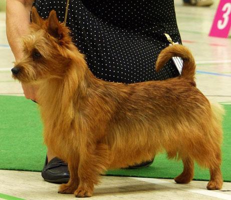 Klubjugendsieger 2014 und 3 bester Junghund der Show