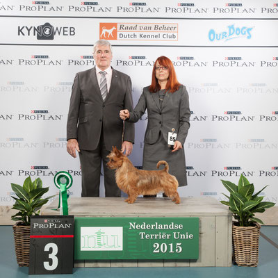 Res. Best in Group 3 Sek.II auf der Terrier Show in Wijchen