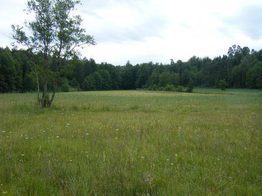 Foto 1: Blick über den Birkenweiher