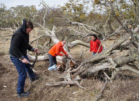 On coupe du bois pour l'asado !