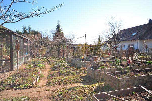 KW12-19.03.2020  14°C im Schatten, wolkenlos, schon viele kleine Blüher im Garten, viel Gartenarbeit