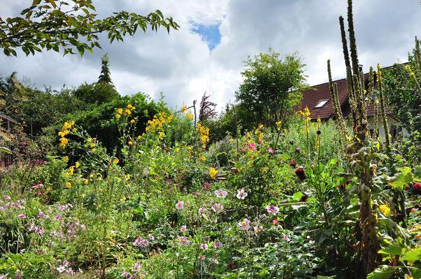 KW36-31.08.2020 morgens 12°C nach zwei Tagen Regen, jetzt lechzt der Garten nach der warmen Sonne