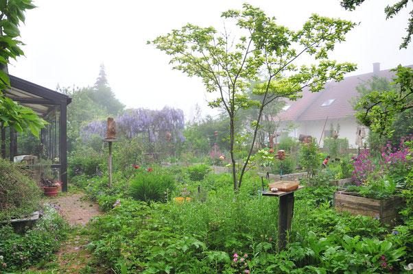 KW20-11.05.2020 die Eisheiligen sind angekommen, eine Nebelhaube bedeckt den Hotzenwald