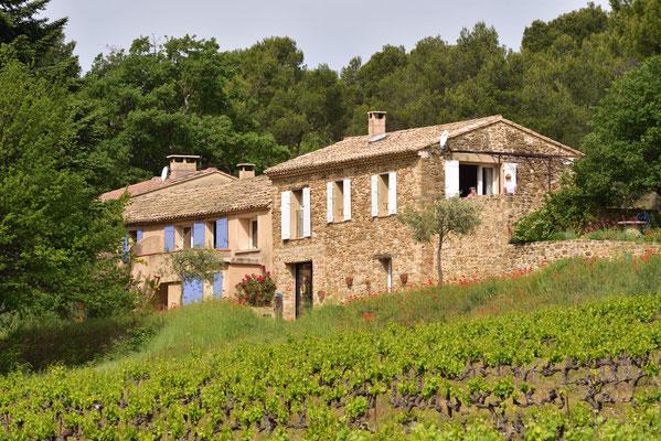 die Wohnungen aus dem Weinfeld heraus fotografiert