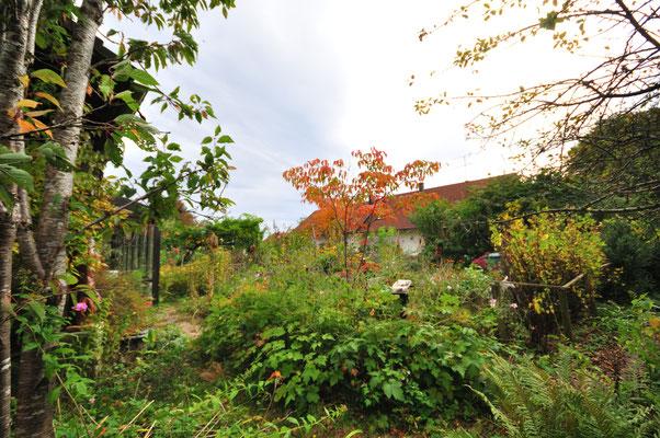 15.10.19 KW42 der Herbst ist da