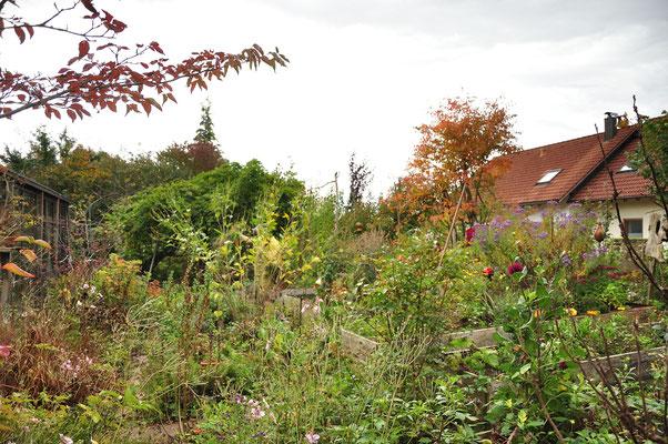 KW23-21.10.2020 12°C bewölkt, der Garten wird z.T. abgeräumt