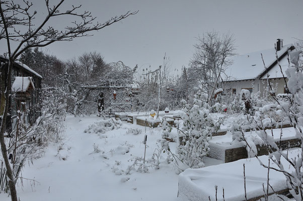 KW49-01.12.2020, -1°C, es schneit nassen Schnee, die Vögel sind bereits eifrig am Futterplatz