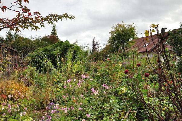 KW41-05.10.2020 + 8°C etwas Regen, im Garten zeigt sich deutlich der Herbst