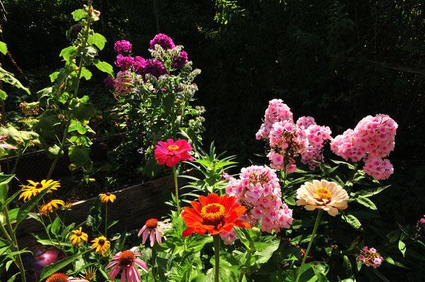 eine Blumenpracht ist das im Aug-Sep-Garten, einmalig!
