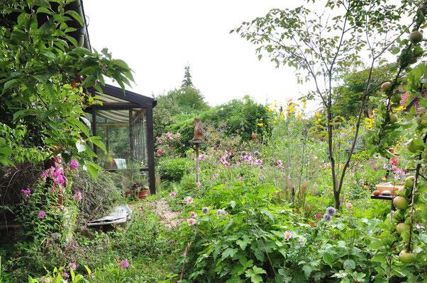 Nach dem Regen (Nacht und Vormittag) ist kaum ein Durchkommen im Garten, alles ist nass