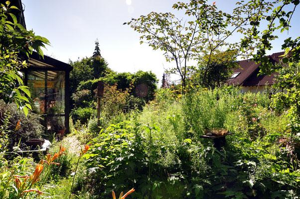 KW28-07.07.2020 wolkenloser Himmel, die Pflanzen wachsen in den Himmel, das Taubenschwänzchen ist auch da.