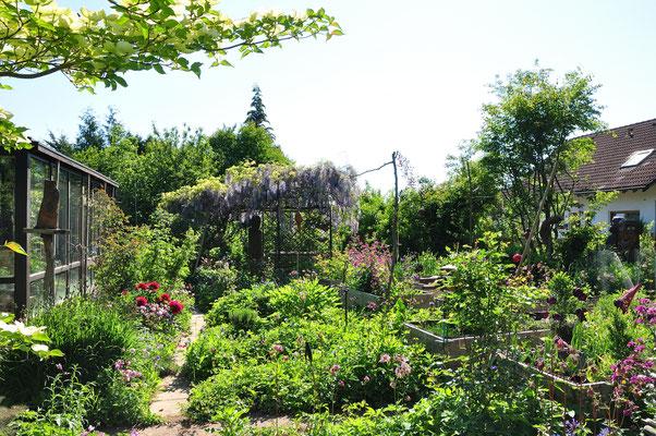 KW21-18.05.2020 es ist wolkenloser Himmel, 19°C, die Insekten fliegen, die Gartenvögel brüten bzw. füttern ihre Brut