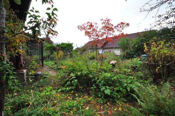 21.10.19 KW43 die roten Blätter der cornus venus leuchten im Herbstlicht