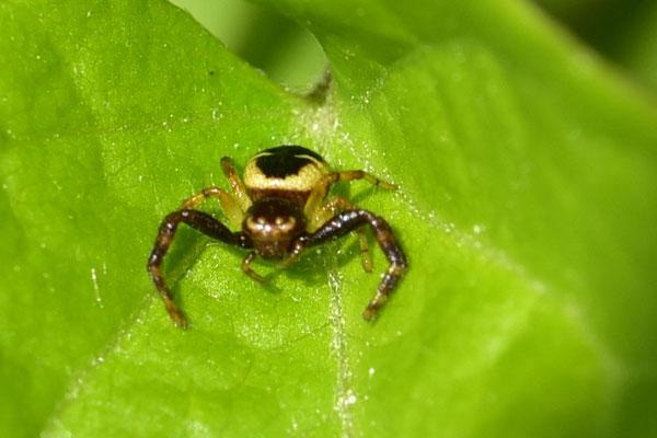 noch ein kleines Spinnchen