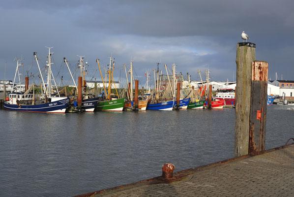 ein schöner farbenfröhlicher Tag im Hafen von Norddeich