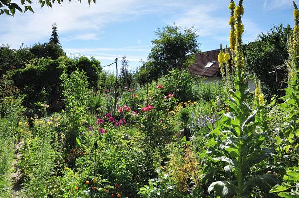 KW30-20.07.2020 Sommerwetter Schmetterlinge, Schwebefliegen, Bienen, Hummeln umschweben die Blüten