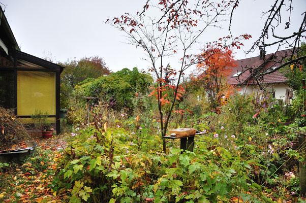 KW44-26.10.2020, 7°C es regnet, viele farbige Blätter von den Bäumen bedecken den Boden, eindeutige Herbstzeichen