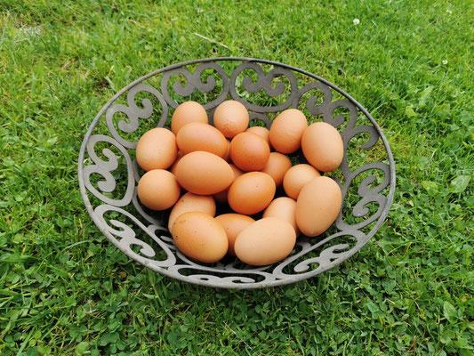 Eier von glücklichen AlmHühnern