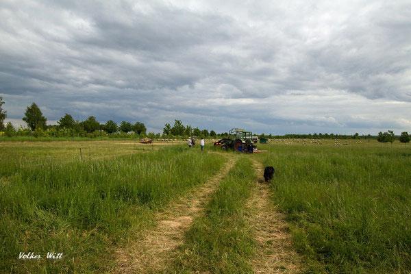Auf dem Weg zur Herde