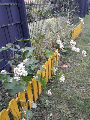 Blühstreifen integriert im Garten in Stemmen