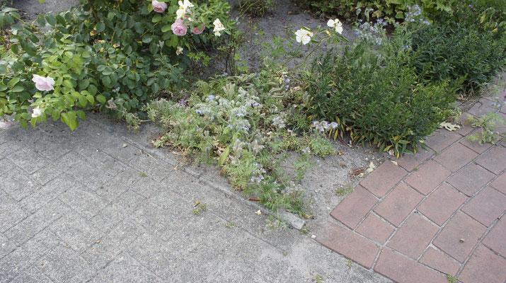 Blühstreifen integriert im Garten