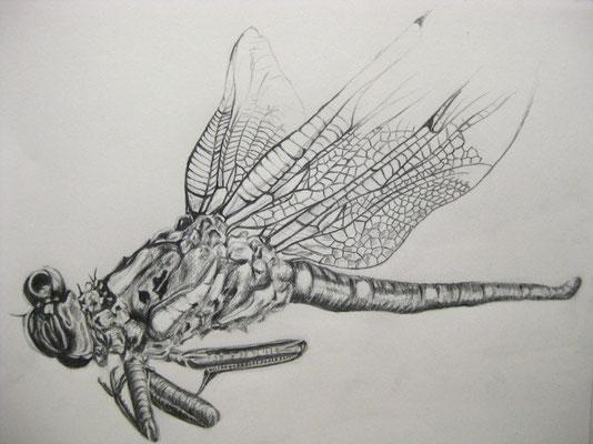 """Tote Libelle"", Bleistift auf Papier, Dina 4, 2009"