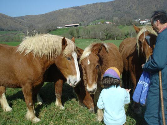 on donne du pain aux chevaux