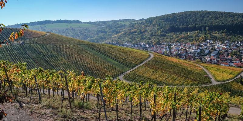 herbstliche Weinberge rund um Weinstadt-Strümpfelbach