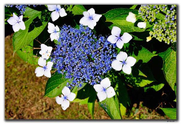 TR0985.Arhavi.Blumen