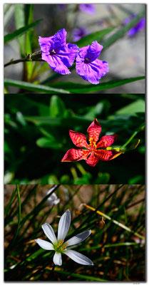 MO0011.Blumen