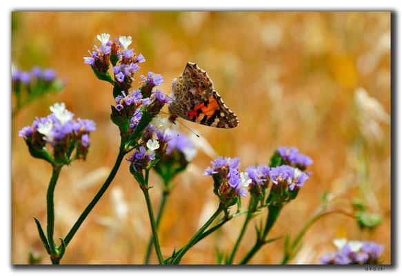 TR0534.Alasiya.Schmetterling