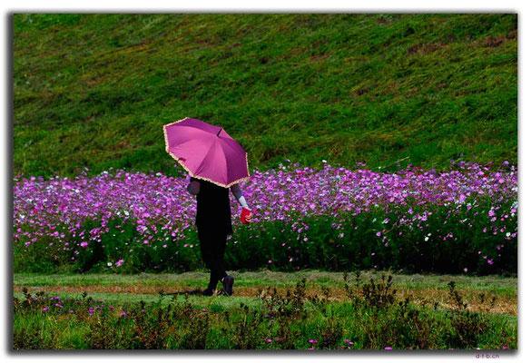 KR0139.Passender Schirm,Chilgok