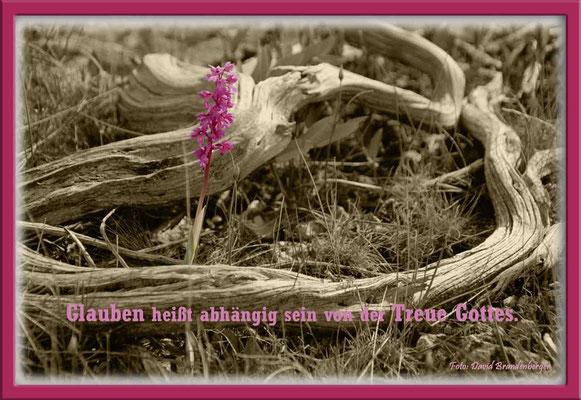 S0080.Knabenkraut.Gotland,SE.Text: Corrie Ten Boom