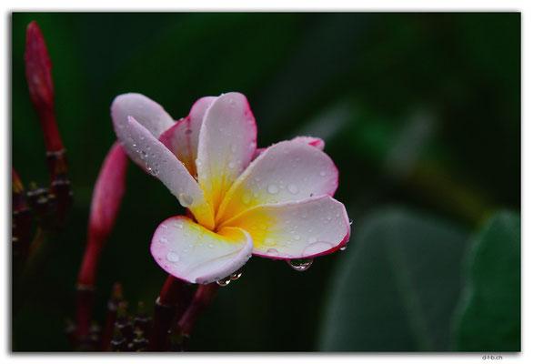 ID0090.Tegallalang.Blume