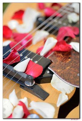 A0914.Rosen und Gitarre.CH