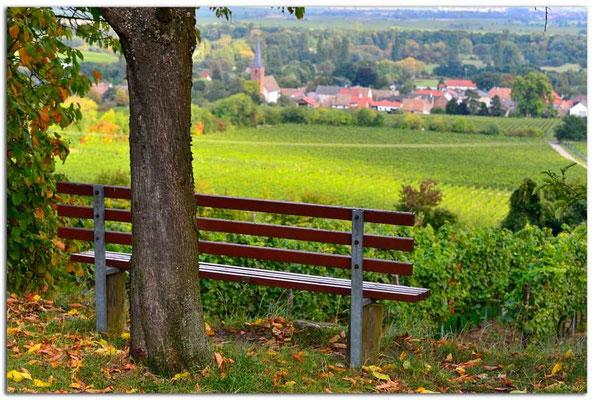 DE188.Pfälzer Weinstrasse.Bank bei Forst