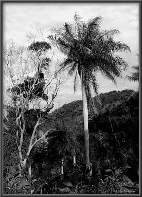 JM024 Palmendschungel