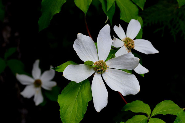 CA0152 Nairn Falls Blume