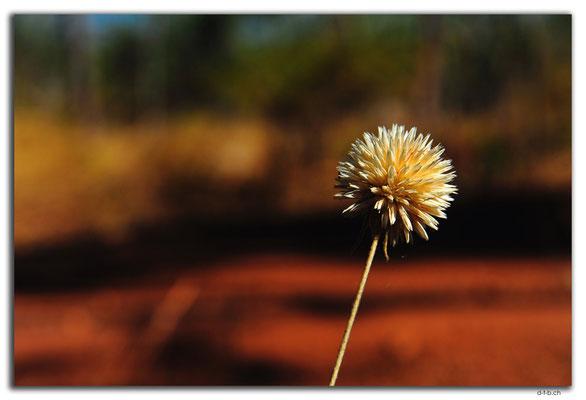 AU00111.Blume