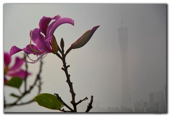 CN0442.Guangzhou.Canton Tower