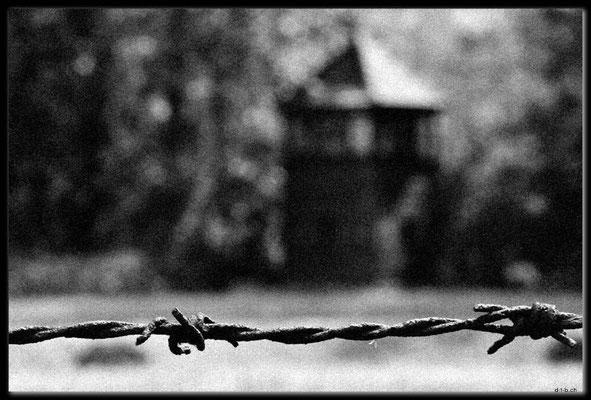 PL039.Birkenau.Stacheldraht