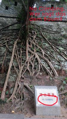 China.Guangzhou.Yuexiu-Park. Wer sagt das dem Baum?
