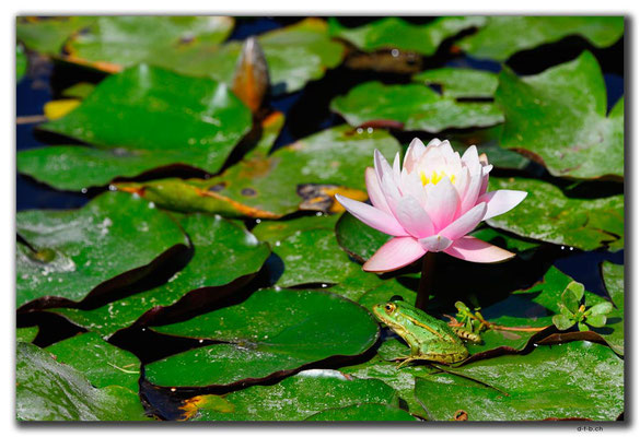 IR0165.Isfahan.Flower Garden.Frosch