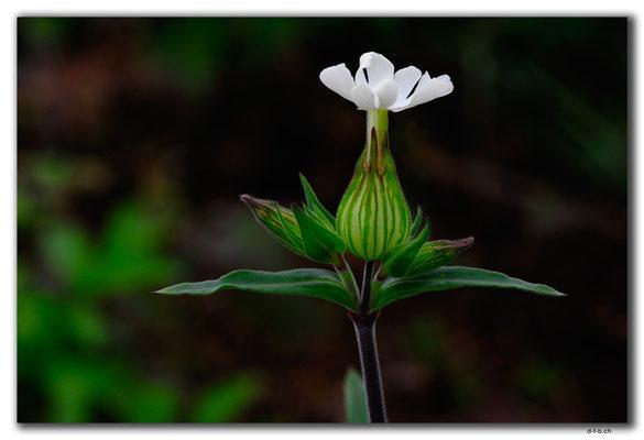 SK016.Blume am Wegrand
