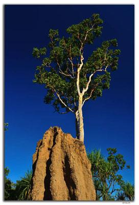 AU0044.Kakadu N.P. Termitenbau