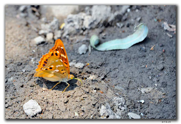 CN0259.Baotou.Schmetterling